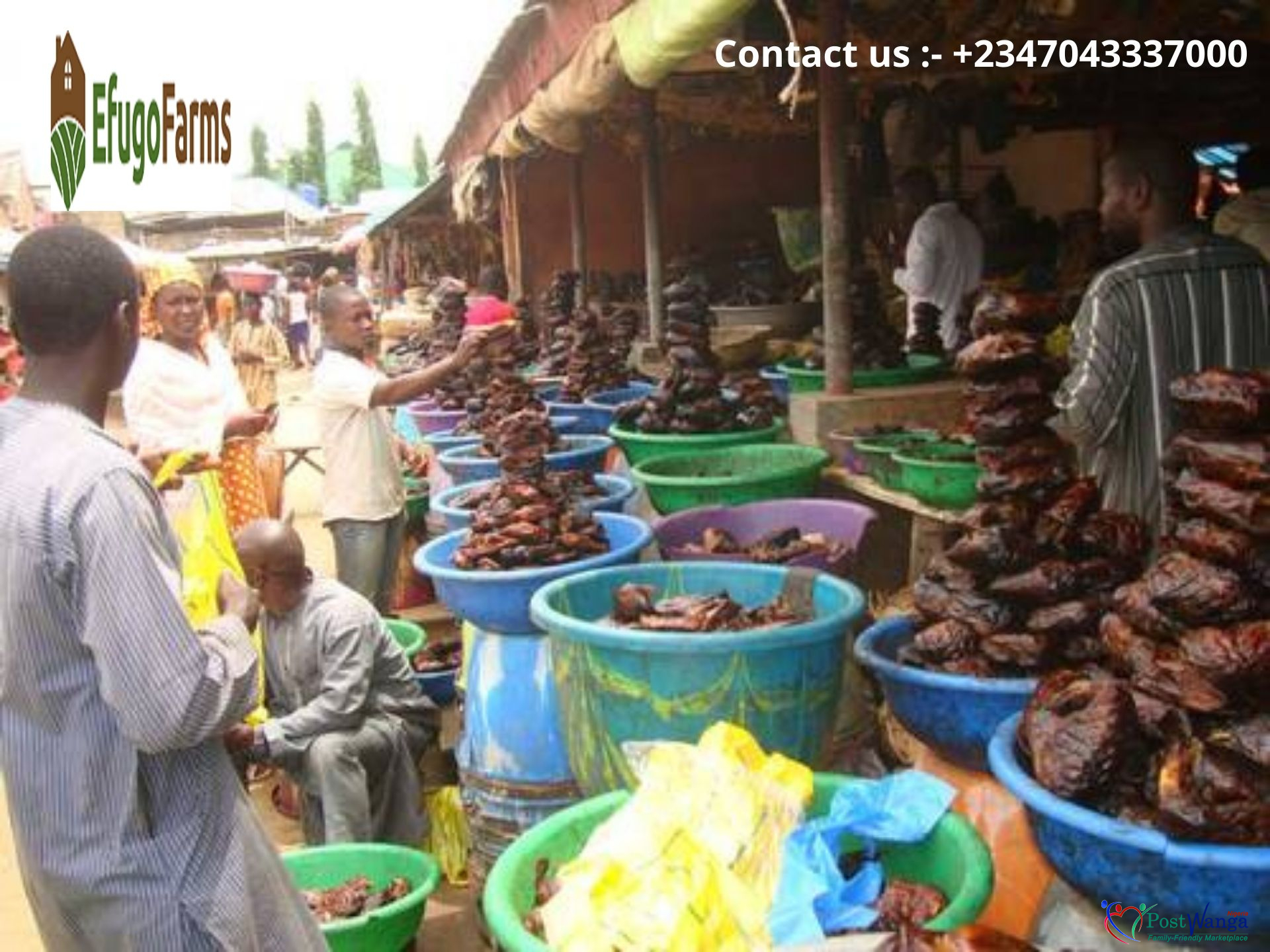 Buy Catfish Abuja